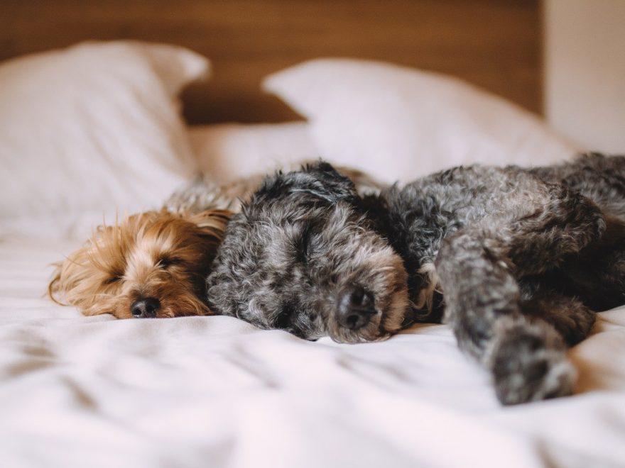 Katt- och hundpensionat- dina fyrbenta familjemedlemmars semesterhem